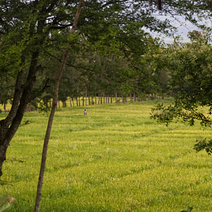 The lush green vegetation near Arusha, Tanzania